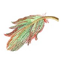 feather needle passion machine embroidery plume flying in the air floating for machine embroidery design designs