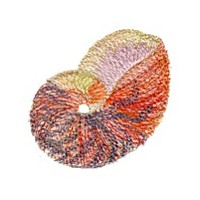 variegated seashell machine embroidery design sea shell