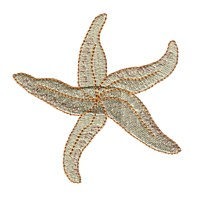 starfish star fish machine embroidery nautical maritime seaside beach sea swimming fishing design art pes hus dst needle passion embroidery npe